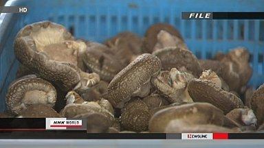 [Eng] Du césium radioactif détecté dans des champignons à Fukushima   NHK WORLD English   Japon : séisme, tsunami & conséquences   Scoop.it