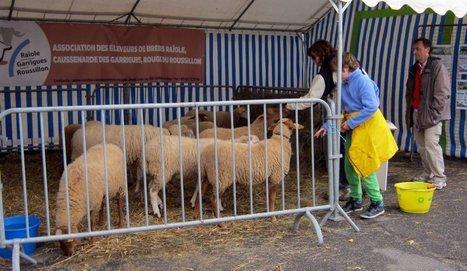 Davalarèm : le pastoralisme s'expose au musée - ladepeche.fr   Utiliser le patrimoine local cévenol pour enseigner   Scoop.it
