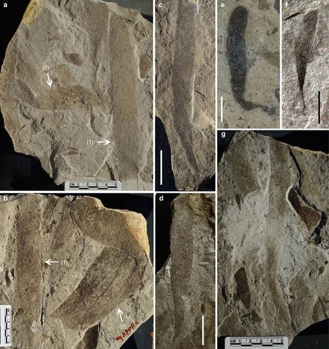 La vie complexe est-elle apparue sur Terre un milliard d'années plus tôt que prévu ? | EntomoScience | Scoop.it