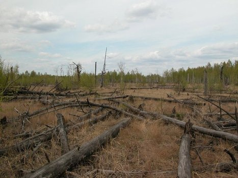 Forests Around Chernobyl Aren't Decaying Properly | Erba Volant - Applied Plant Science | Scoop.it
