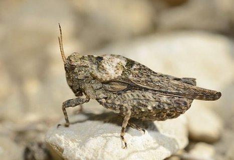 Deux nouvelles espèces dans les Deux-Sèvres | EntomoNews | Scoop.it