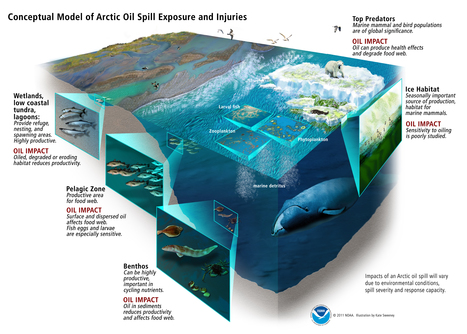 Vital role in curtailing #Whaling + Am with #GreenPeace on #SavingArctic from destructive #OilDrilling #SavingAnEnvironment | Rescue our Ocean's & it's species from Man's Pollution! | Scoop.it