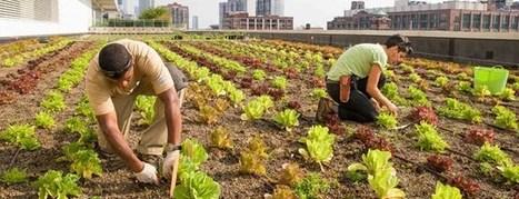 La agricultura urbana está de moda. Balcones, terrazas y azoteas se tiñen de verde | EcoAgroPaisaje | Scoop.it