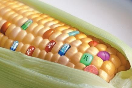 OGM, l'Ue consente ai Paesi di vietare le colture | Il mondo che vorrei | Scoop.it