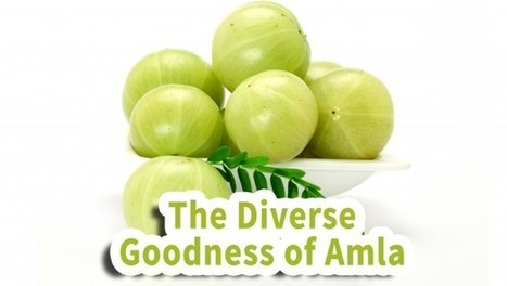 The Diverse Goodness of Amla - | Health Tips | Scoop.it