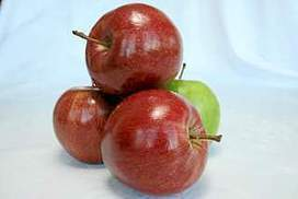 Apples lose crunch from climate change, study finds | Class 8 Sustainability | Scoop.it