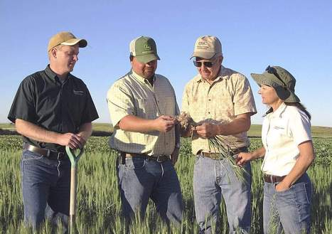 Wheat evaluated for cereal cyst nematode - Capital Press   Wheat   Scoop.it
