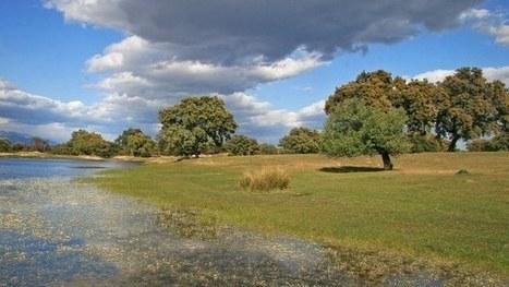 Mapping habitats to describe ecosystems — European Environment ... | Remote Sensing | Scoop.it