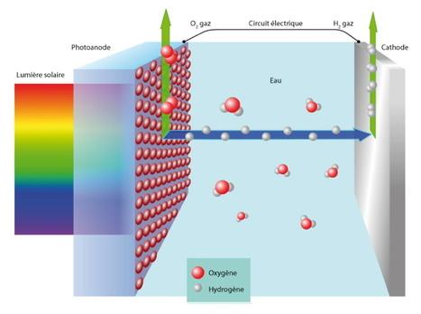 Stockage de l'énergie Production de gaz hydrogène directement à partir de l'énergie solaire | Biomimétisme Biomimicry | Scoop.it