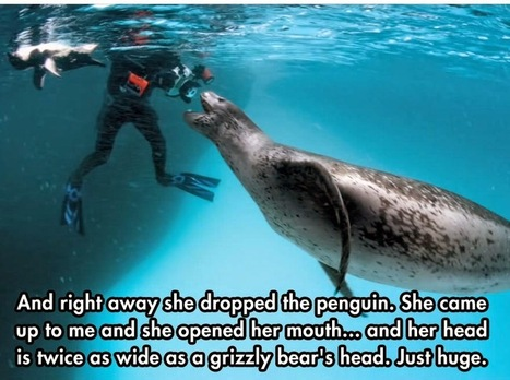 Photographer Gets Too Close To A Dangerous Predator, Then Something Amazing Happens | Antarctica | Scoop.it