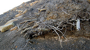 MUMMIFIED FOREST UNCOVERED IN NUNAVUT   Inuit Nunangat Stories   Scoop.it