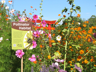 The Xerces Society » Bring Back The Pollinators Campaign | Our Evolving Earth | Scoop.it