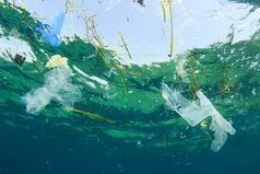 #Plastic Found in a Sixth of Pelagic Fish in Mediterranean #foodchain   Rescue our Ocean's & it's species from Man's Pollution!   Scoop.it