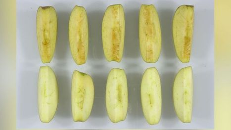 The Health Effects of GMO Foods | News Pop | Scoop.it