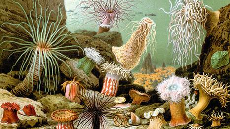 Nueva hipótesis sobre la evolución de la vida en nuestro planeta | adn-dna.net: cajón de sastre | Scoop.it
