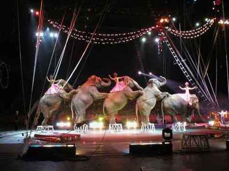 Most Common Circus Acts in Perth | Circus in Perth | Scoop.it