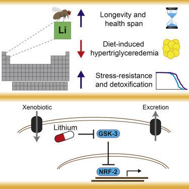 Lithium et Valium | EntomoNews | Scoop.it