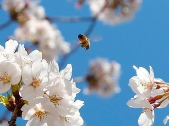 Tree surgeon in England goes out of his way to save 20,000 bees | This Gives Me Hope | Scoop.it