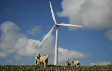 Pour réduire ses gaz, la Nouvelle-Zélande veut purifier le pet de mouton | Mais n'importe quoi ! | Scoop.it