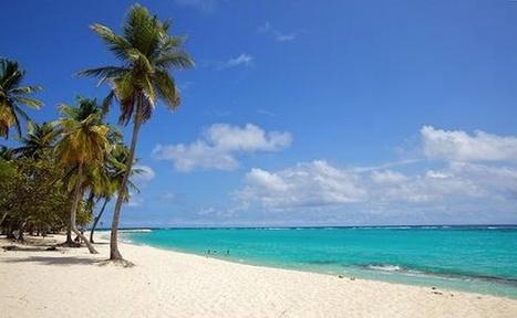 Chikungunya : pour les vacances, fuyez la Guadeloupe et la Martinique! Déjà plus de 40 morts. | INFOS SANTE DIVERSES | Scoop.it