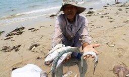 Vietnam investigates mass fish deaths | Global Aquaculture News & Events | Scoop.it