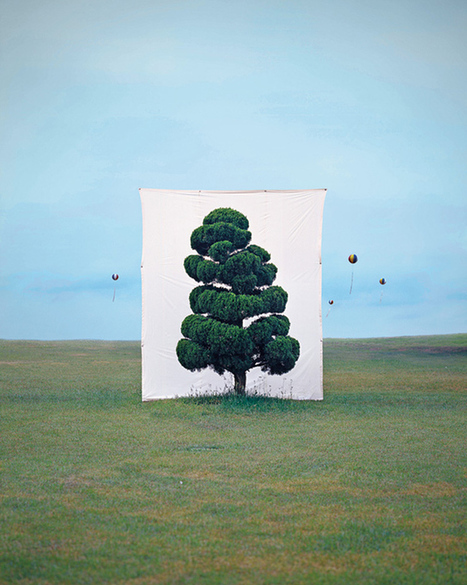 Trees Are Framed by Giant Canvas Backdrops in Photo Series | How to make photos on canvas | Scoop.it