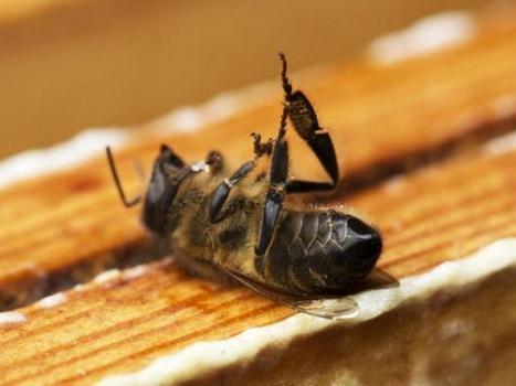 Une nouvelle étude confirme le rôle des pesticides dans la mortalité des abeilles | Slate | Abeilles, intoxications et informations | Scoop.it