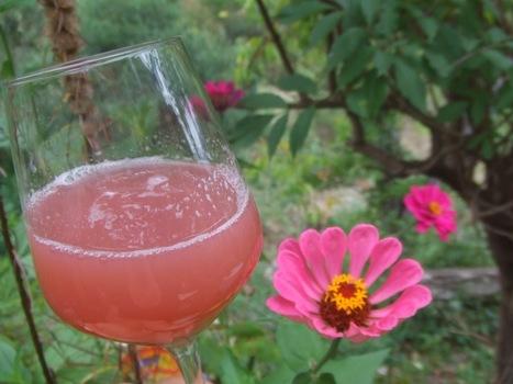 Vorbereitung auf die Weinrallye #50: Naturwein und Konsorten | Weinrallye | Scoop.it