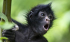 The week in wildlife - in pictures | Planeta Tierra | Scoop.it