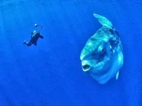 1010062_238875599599104_1590155019_n.jpg (608×456) | plongee scuba diving tec diving | Scoop.it