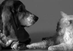Fallon parodies 'First Kiss' video with puppies and kittens - New York Daily News | Books, Photo, Video and Film | Scoop.it