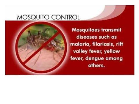 """""""WORLD MOSQUITO DAY - August 20"""" 