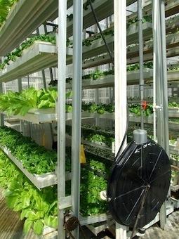 Tv Meio Ambiente   Farming in the Sky in Singapore   Vertical farming   VertiFarm©   Scoop.it