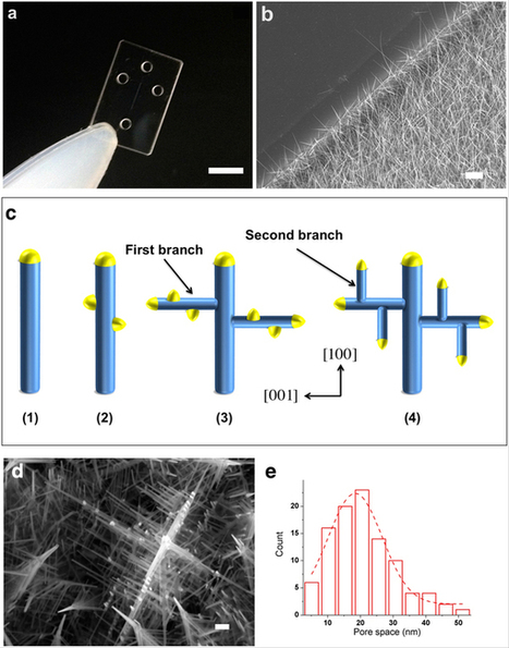 Three-dimensional Nanowire Structures for Ultra-Fast Separation of DNA, Protein and RNA | Amazing Science | Scoop.it