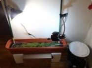 """The Urban Garden - Adventures in Automated Indoor Gardening"" (Channel 9)   Arduino, Netduino, Rasperry Pi!   Scoop.it"