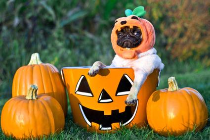Halloween Events in Bucks County, PA 2013   Bucks County Area Real Estate News   Scoop.it
