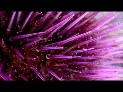 Underwater astonishments - David Gallo | Bioluminescence | Scoop.it