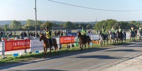 Finales nationales de jeunes chevaux à Uzès : bilan commercial ... - Midi Libre   Cheval et sport   Scoop.it