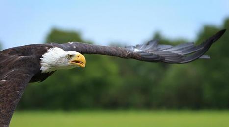 Pays-Bas. La police adopte des aigles pour capturer les drones | 2025, 2030, 2050 | Scoop.it
