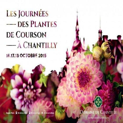 Design v g tal - Journee des plantes chantilly ...
