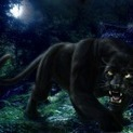Black Panther HD Wallpaper | Black Panther Images | Cool Wallpapers | Top Photos and Wallpapers | Scoop.it