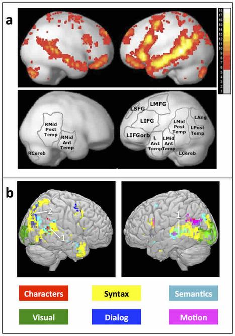 Researchers Identify Brain Regions That Encode Words, Grammar and Story | Social Neuroscience Advances | Scoop.it
