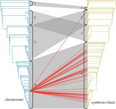 Metapopulation dominance and genomic-island acquisition of Bradyrhizobium with superior catabolic capabilities | Plant-Microbe Symbiosis | Scoop.it
