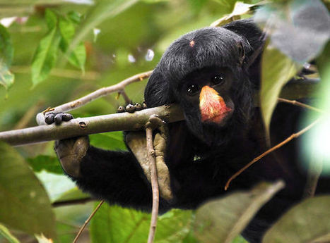 Brazil declares new protected area larger than Delaware | Forests | Scoop.it