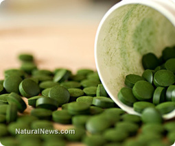 Research suggests chlorella may have apoptotic anticancer effects | Chlorella | Scoop.it