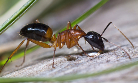 Lost Ants Use Visual Cues to Quickly Navigate | All About Ants | Scoop.it