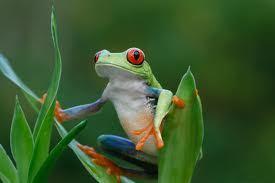 Le Costa Rica , l ' écologie comme empreinte - Journal International   Chronique d'un pays où il ne se passe rien... ou presque !   Scoop.it