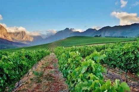 Wines we've been drinking this week - Decanter | Wine | Scoop.it
