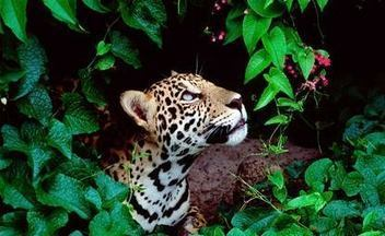 Costa Rica's being sued for saving the rainforest | Ecuador | Scoop.it