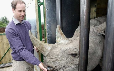 Prince William backs new conservation awards - Telegraph | Kruger & African Wildlife | Scoop.it